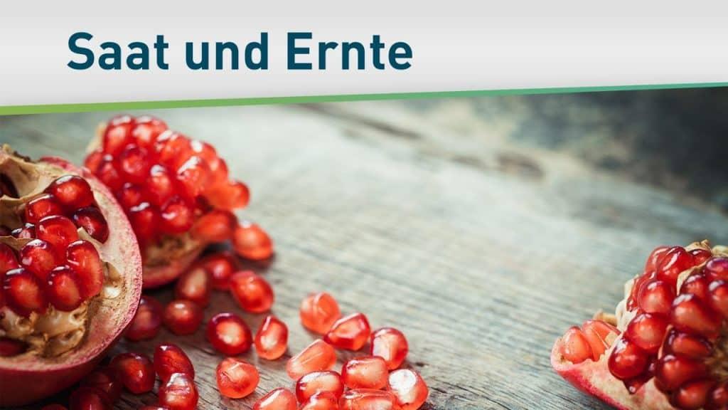 Das Prinzip von Saat und Ernte 46