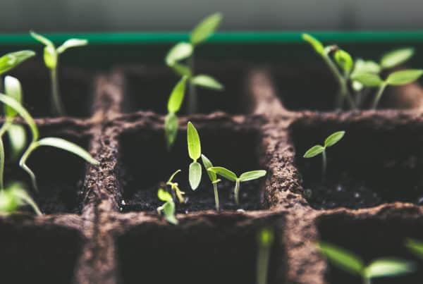 Gott möchte dir Wachstum schenken! 3