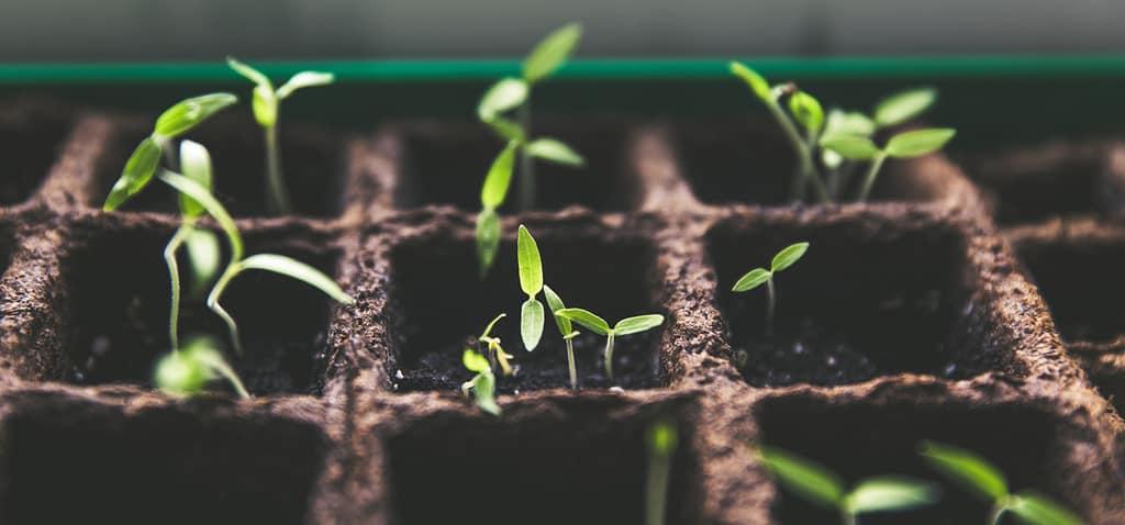 Gott möchte dir Wachstum schenken!
